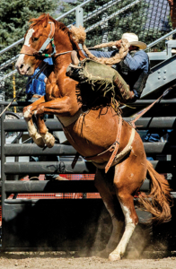 Bucking Horse, Ouray County Rodeo