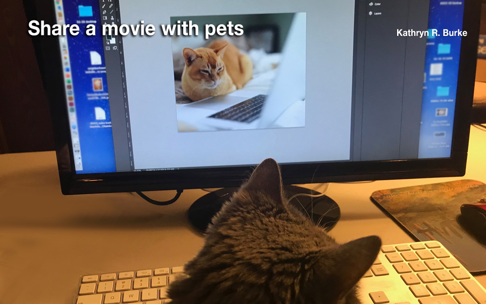 Watch movie with pet